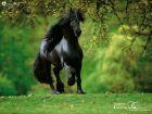 Avazak_ir-Horse (20).jpg