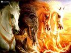 Avazak_ir-Horse (26).jpg