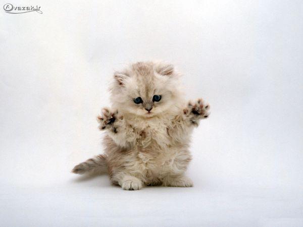 کارت پستال از گربه های ملوس