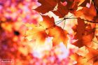 autumn,photography