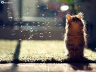 عکس گربه - ناز - پشمالو - با نمک - خوشگل