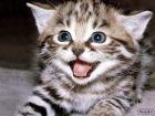 عکس - گربه - ناز - پیشی - زیبا - بامزه