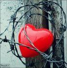 قلب - اسیر - سیم خاردار - عاشقانه