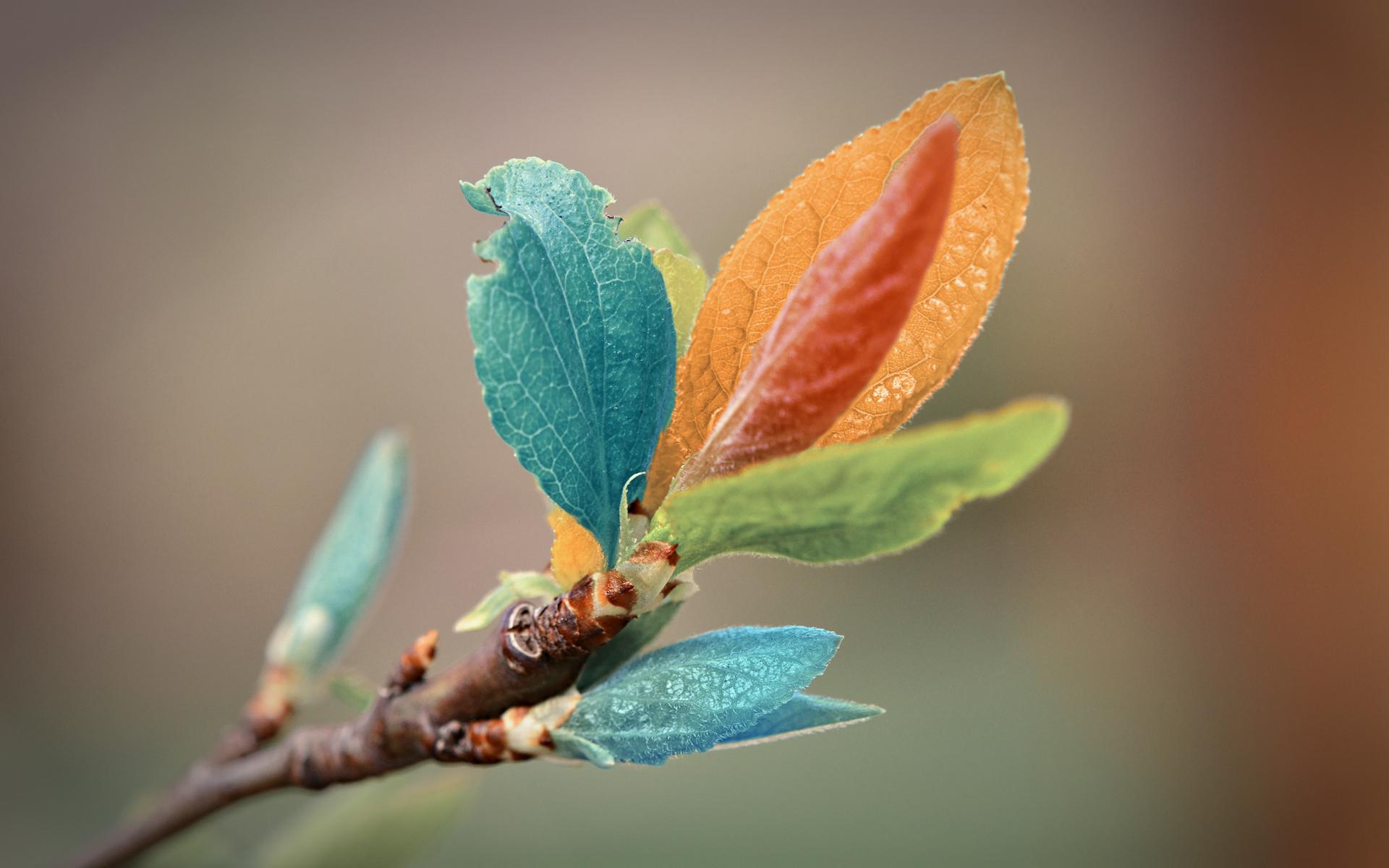 colorful_leaves-wide.jpg